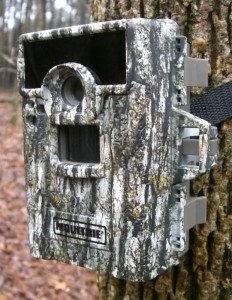 piege photographique installé sur un arbre